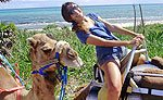 Camel Riding Riviera Maya