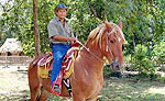 Costa Maya Horseback Riding