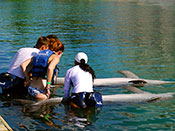 Xel Ha Dolphin Trainer for a Day