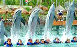 Xcaret Dolphins