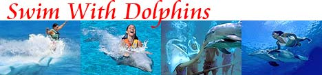 Swim With Dolphins Riviera Maya!