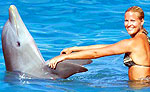 Dolphin Trainer for a Day in Cozumel
