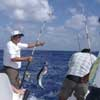 Shared Cozumel Fishing