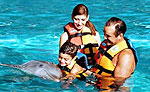 Dolphin Swimming Cancun