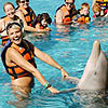 Royal Garrafon Dolphin Encounter