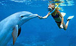 Dolphin Royal Swim - Garrafon