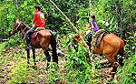 Playa del Carmen Horseback Riding