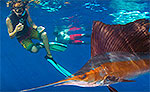 Sailfish Snorkeling Playa del Carmen