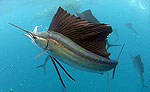 Sailfish Snorkeling Tour Cancun