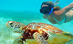 Cozumel Sea Turtle Snorkeling Tour
