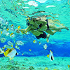 Cancun Snorkeling Adventure