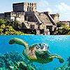 Tulum & Sea Turtles