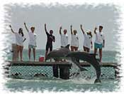 Dolphin Trainer for a Day Cancun