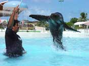 Sea Lion Swim Cancun