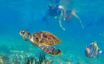 Sea Turtle Snorkeling Cancun