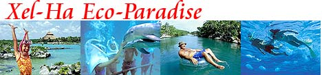 Swim With Dolphins at Xel Ha!